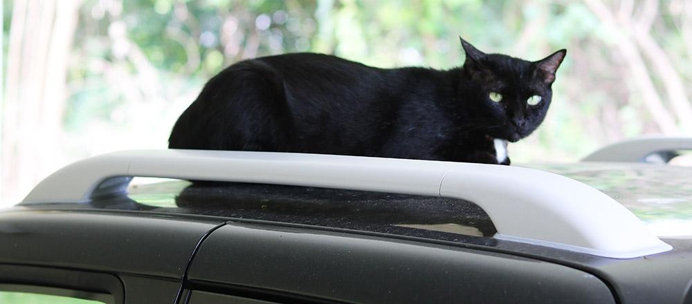 black pickup s.jpg