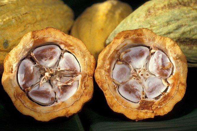 cacao-pod-x-section-keith-weller-usda-ars.jpg