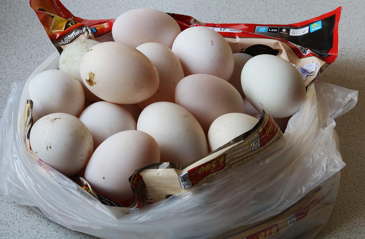duck eggs s.jpg