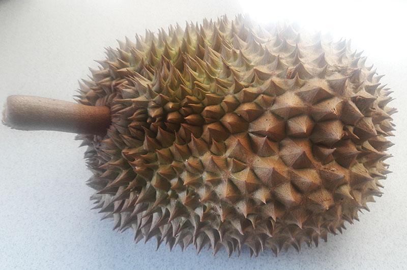 durian s.jpg