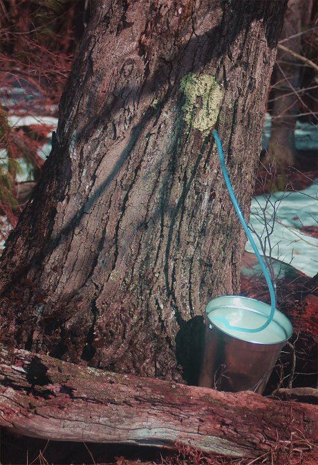 maple-syrup-large-collection.jpg