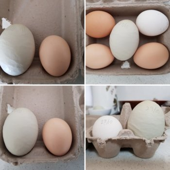 SNSSOs Home Grown Free Range Eggs