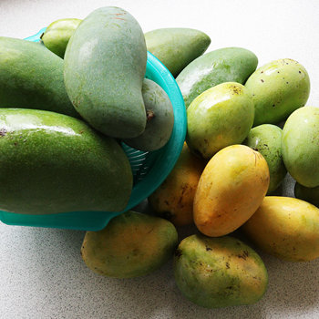 Mangoes (sweet)