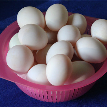 Fresh duck eggs.