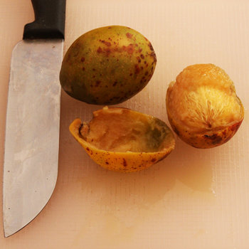 Hog plum fruit s.jpg