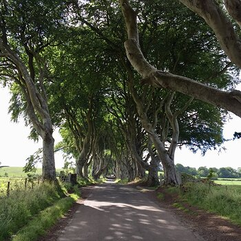 2018 N Ireland - Dark Hedges